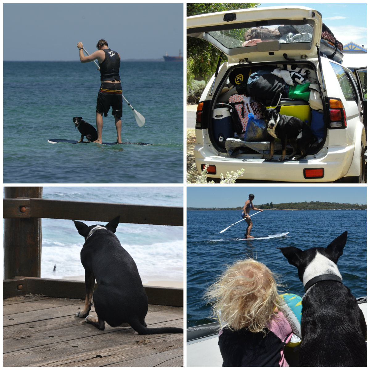 The Dog's Guide to Western Australia