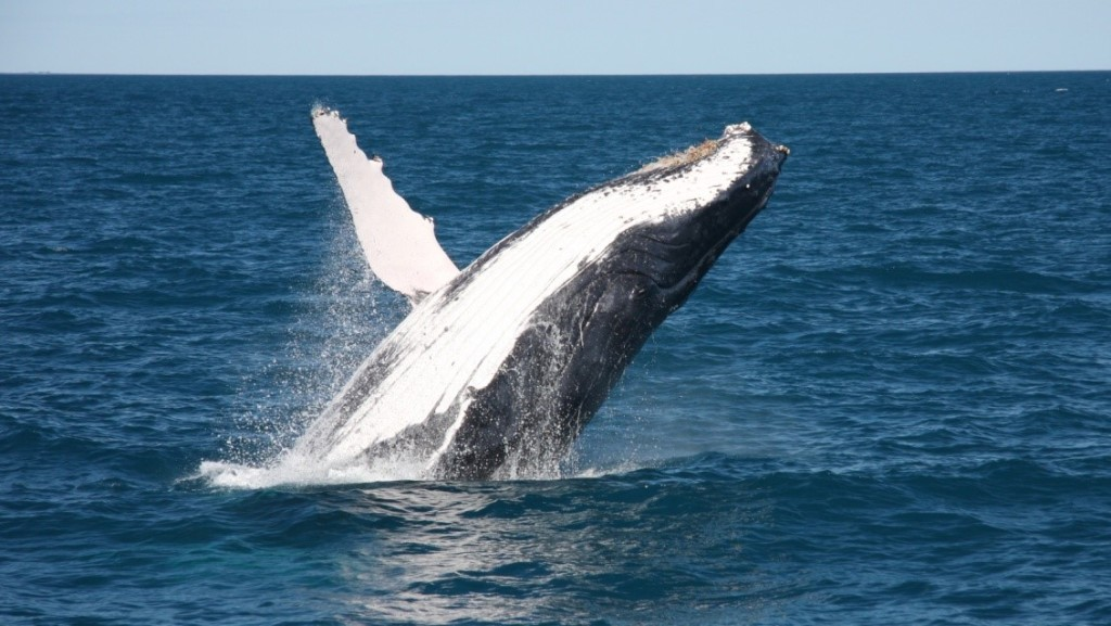 Broome Whales