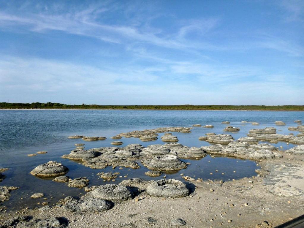 Stromatolites Lake Thetris