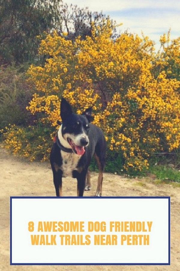 8 Awesome dog trails near Perth