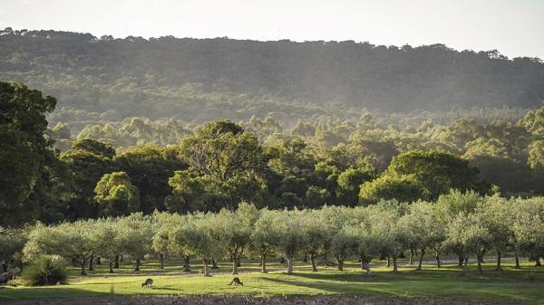 Petra Olive Oil Estate