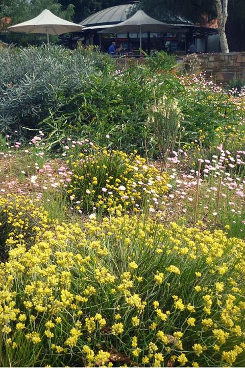 Top spots for flower lovers in Western Australia