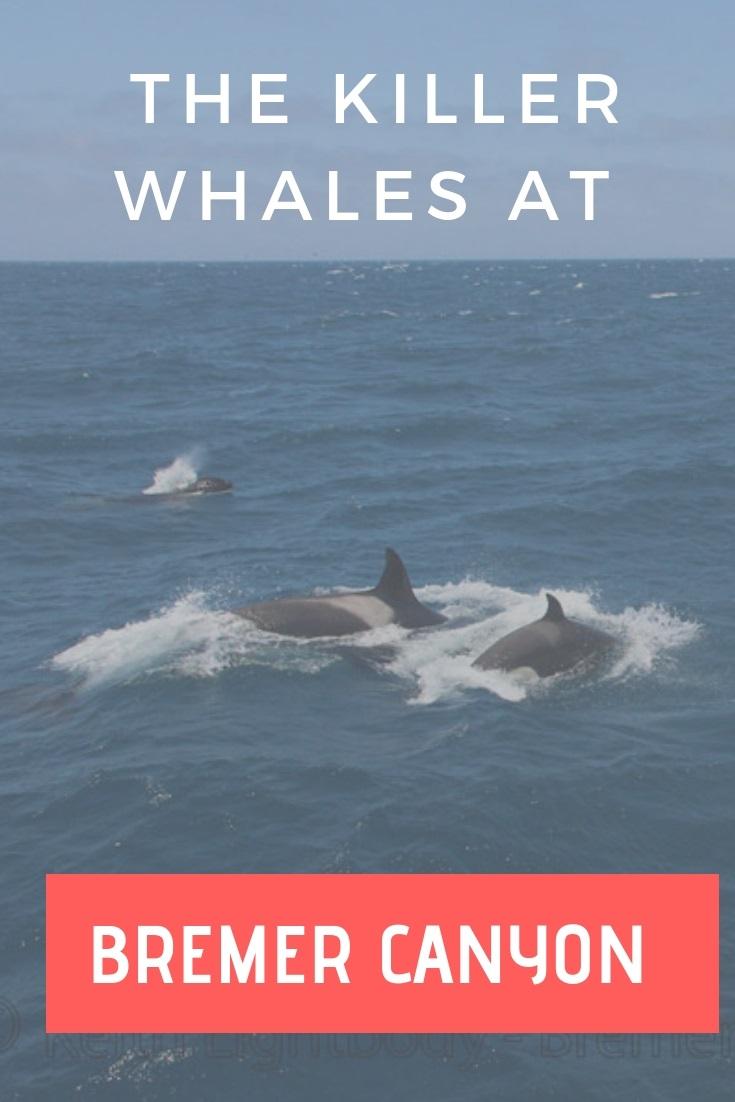 Killer Whales at Bremer Canyon