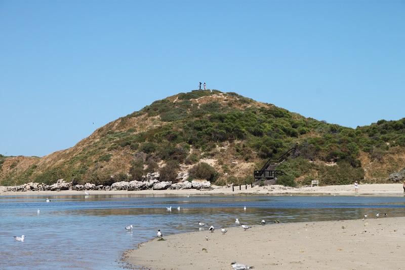 Penguin Island Perth