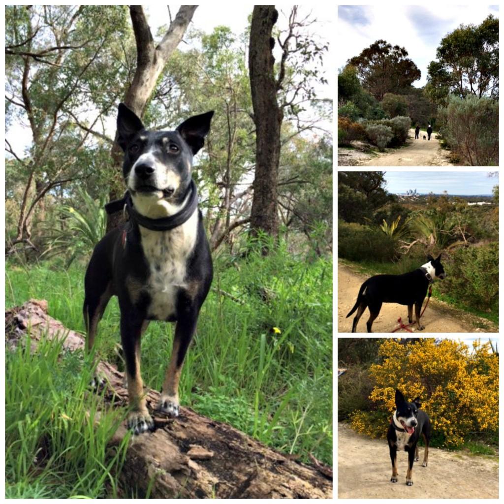 Dog friendly walking trails near Pert