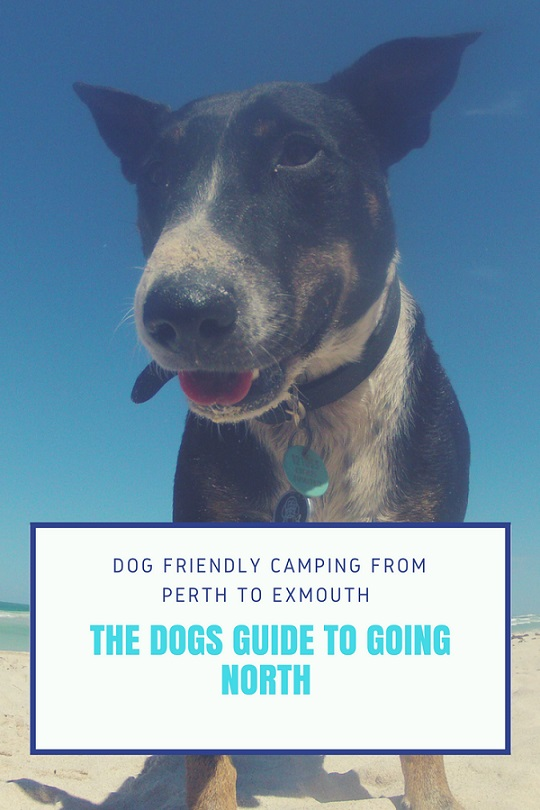 The Dog S Guide To Going North Dog Friendly Camping From Perth To