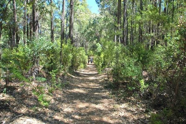 Bushwalking at Lane Poole Reserve
