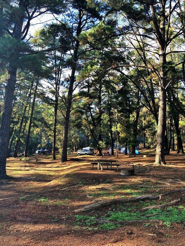 Camping at Nanga Mill at Lane Poole Reserve