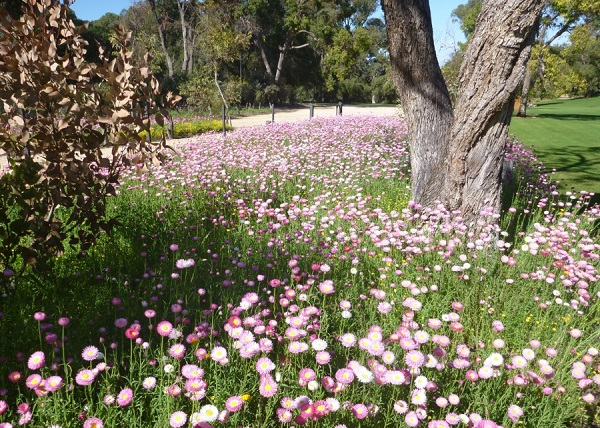 The incredible wildflowers of Western Australia
