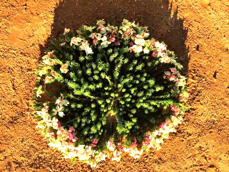 Wreath Flower Western Australia