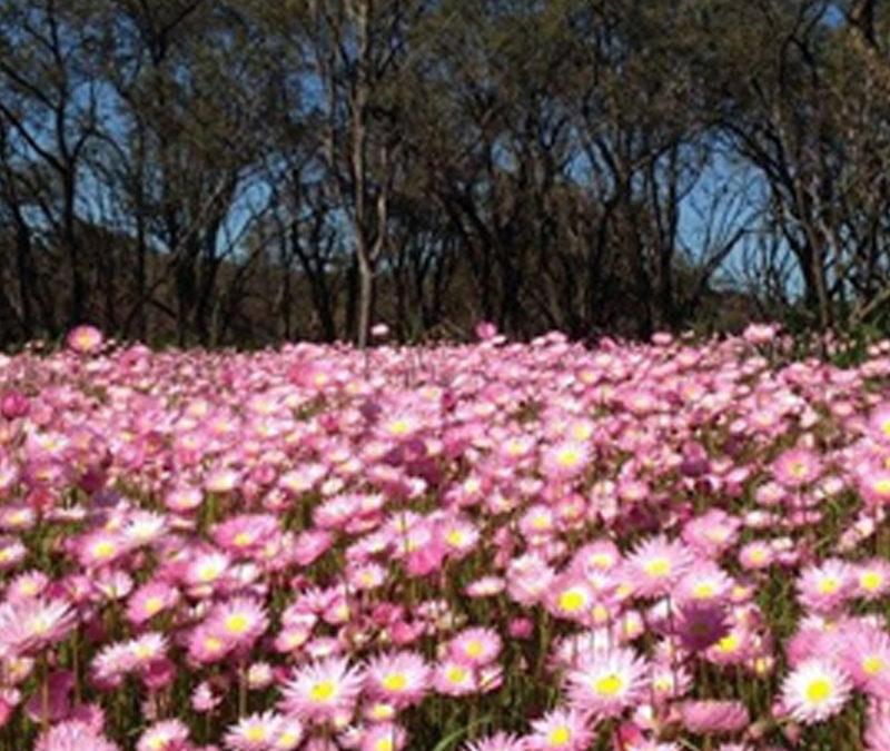 incredible Wildflowers