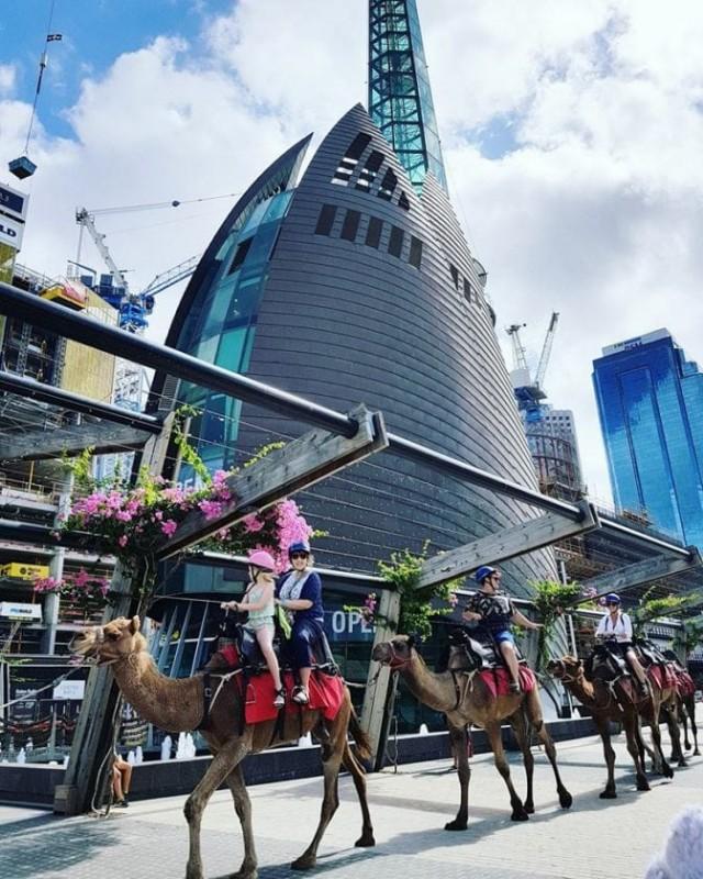 Perth camel rides