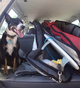 How to travel with pets in Western Australia – West