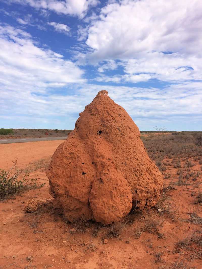 Termite Mounds Exmouth