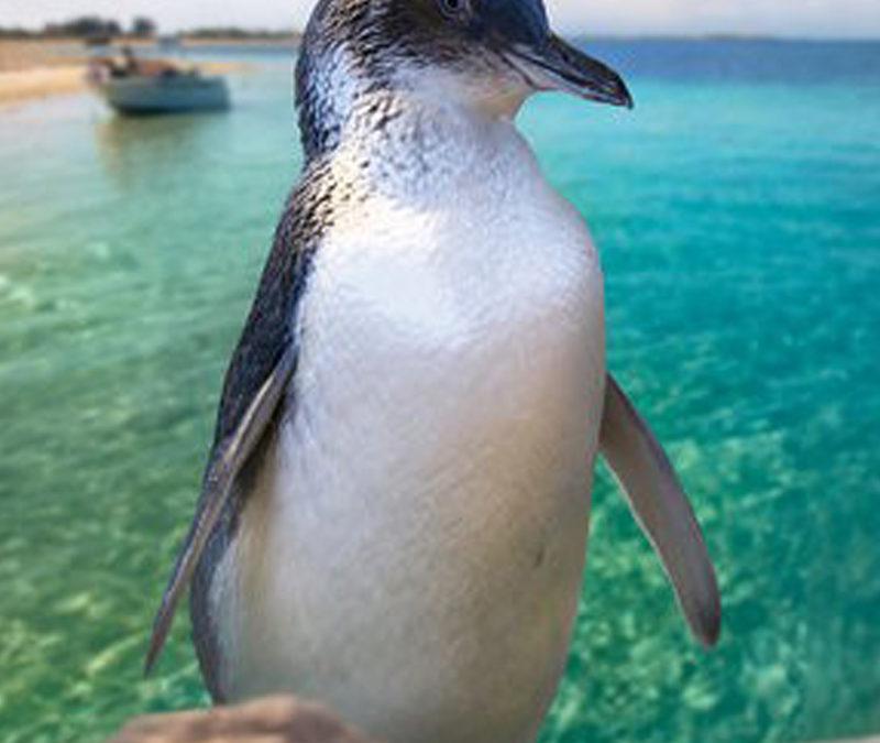 Penguin Penguin Island