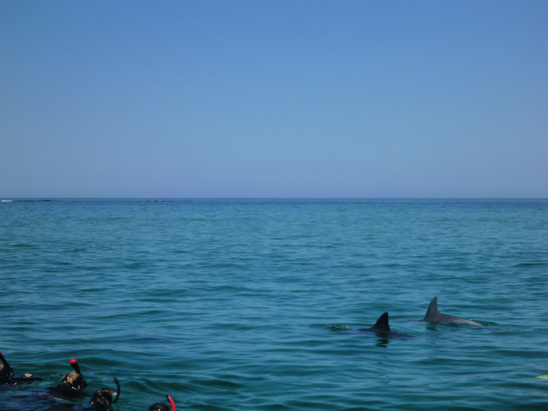 swimming with dolphins western australia