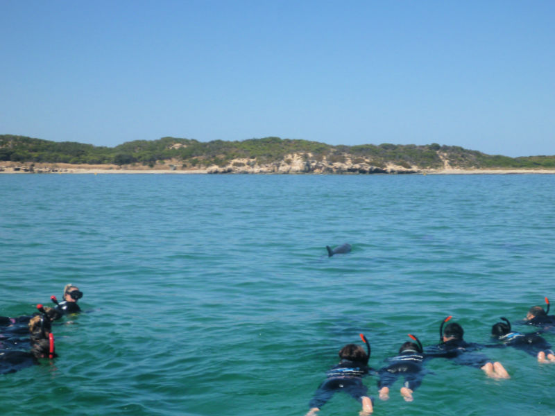 Swimming with Dolphins Perth