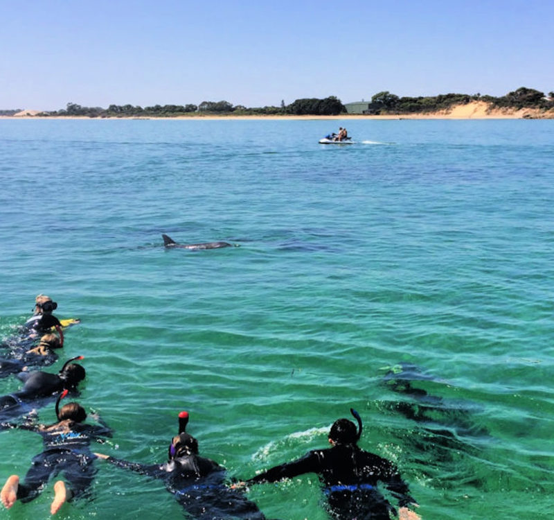 Swim with dolphins Western Australia
