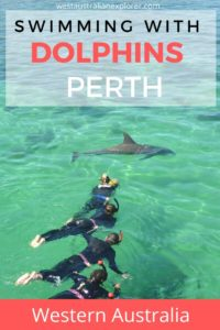 swim with dolphins in Perth Western Australia